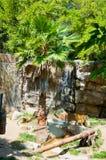 Βασιλική τίγρη της Βεγγάλης στο ζωολογικό κήπο του Λος Άντζελες Στοκ Εικόνες