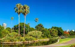 Βασιλικός βοτανικός κήπος του Σίδνεϊ - της Αυστραλίας, Νότια Νέα Ουαλία Στοκ Εικόνα
