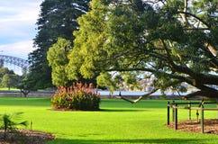 Βασιλικός βοτανικός κήπος 2 του Σίδνεϊ Στοκ Φωτογραφίες