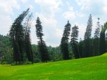 Βασιλικός βοτανικός κήπος Peradeniya Σρι Λάνκα Στοκ Εικόνες