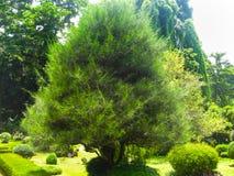 Βασιλικός βοτανικός κήπος Peradeniya Σρι Λάνκα Στοκ Φωτογραφίες