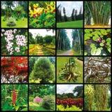 Βασιλικός βοτανικός κήπος Peradeniya Σρι Λάνκα Στοκ Εικόνα