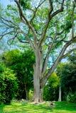 Βασιλικός βοτανικός κήπος Peradeniya στη Σρι Λάνκα Στοκ Εικόνες