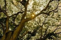 Βασιλικός βοτανικός κήπος Peradeniya στη Σρι Λάνκα Στοκ φωτογραφία με δικαίωμα ελεύθερης χρήσης