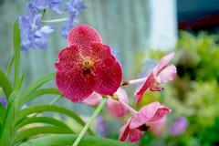 Βασιλικός βοτανικός κήπος Peradeniya στη Σρι Λάνκα Στοκ εικόνα με δικαίωμα ελεύθερης χρήσης