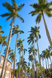 Βασιλικός τρόπος Φλώριδα ΗΠΑ φοινικών του Palm Beach Στοκ Εικόνα