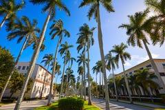 Βασιλικός τρόπος Φλώριδα ΗΠΑ φοινικών του Palm Beach Στοκ φωτογραφία με δικαίωμα ελεύθερης χρήσης