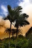 Βασιλικός φοίνικας στο ηλιοβασίλεμα, Μαυρίκιος (regia Roystonea) Στοκ Φωτογραφία