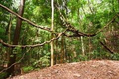 Βασιλικό Forest Park Udawattakele Στοκ φωτογραφία με δικαίωμα ελεύθερης χρήσης
