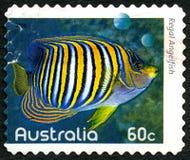 Βασιλοπρεπές αυστραλιανό γραμματόσημο Angelfish Στοκ Εικόνα