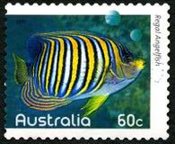 Βασιλοπρεπές αυστραλιανό γραμματόσημο Angelfish Στοκ Φωτογραφίες