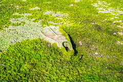Βατραχοπέδιλο κατάδυσης που καλύπτεται με τα άλγη που μολύνουν την παραλία στοκ εικόνα με δικαίωμα ελεύθερης χρήσης