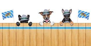 Βαυαρικά σκυλιά στοκ εικόνα