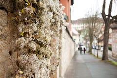 Βαυαρικές εγκαταστάσεις Στοκ εικόνες με δικαίωμα ελεύθερης χρήσης