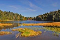 βαυαρική δασική λίμνη arbersee Στοκ Εικόνες