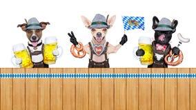 Βαυαρική σειρά σκυλιών μπύρας στοκ εικόνες