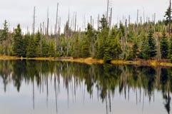 Βαυαρικό δάσος Στοκ Φωτογραφίες
