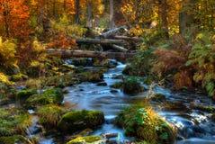βαυαρικό δάσος Στοκ Εικόνες
