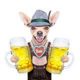 Βαυαρικό σκυλί μπύρας στοκ εικόνα με δικαίωμα ελεύθερης χρήσης