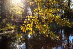 Βαλανιδιά κλάδων φθινοπώρου Στοκ Εικόνα