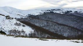 Βαλκανικά δέντρα βουνών pan απόθεμα βίντεο