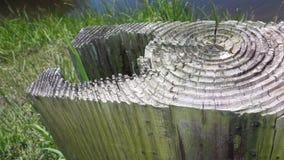 Βαλμένες σε στρώσεις κορυφογραμμές στο κολόβωμα Στοκ Εικόνες