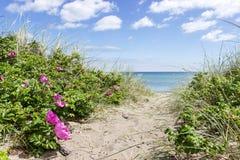 βαλτική Εσθονία κοντά στη θάλασσα somethere Ταλίν Στοκ φωτογραφίες με δικαίωμα ελεύθερης χρήσης