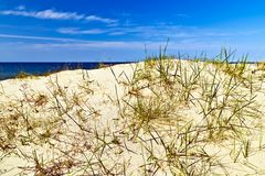 Βαλτικοί αμμόλοφοι Στοκ φωτογραφία με δικαίωμα ελεύθερης χρήσης