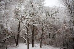 βαλτικός χειμώνας θύελλας της Ρωσίας αποβαθρών zelenogradsk Στοκ Εικόνα