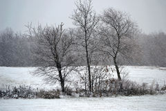 βαλτικός χειμώνας θύελλας της Ρωσίας αποβαθρών zelenogradsk στοκ φωτογραφία με δικαίωμα ελεύθερης χρήσης