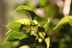 βγάζει φύλλα ηλιοφώτιστο Στοκ Φωτογραφίες