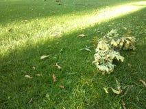 Βγάζει φύλλα και χλόη Στοκ εικόνα με δικαίωμα ελεύθερης χρήσης