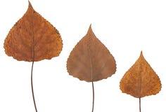 βγάζει φύλλα πατημένος στοκ εικόνες