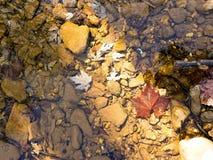 Βγάζει φύλλα στο νερό Στοκ εικόνα με δικαίωμα ελεύθερης χρήσης