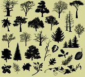 βγάζει φύλλα τα δέντρα διάφορα στοκ φωτογραφίες