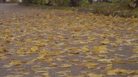 Βγάζει φύλλα την πτώση στο πάρκο πόλεων φθινοπώρου φιλμ μικρού μήκους