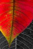 βγάζει φύλλα τη μακροεντ&om Στοκ φωτογραφίες με δικαίωμα ελεύθερης χρήσης