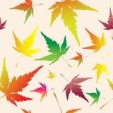 βγάζει φύλλα το πρότυπο σφ ελεύθερη απεικόνιση δικαιώματος