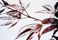 βγάζει φύλλα το σφένδαμνο  Στοκ φωτογραφίες με δικαίωμα ελεύθερης χρήσης