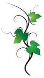 βγάζει φύλλα Στοκ Εικόνες