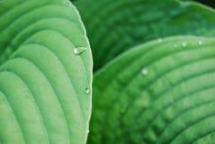 βγάζει φύλλα waterdrops Στοκ Φωτογραφία