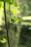 Βγάζει φύλλα και σκιάζει στοκ φωτογραφία με δικαίωμα ελεύθερης χρήσης