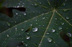 Βγάζει φύλλα μετά από το λουτρό Στοκ εικόνα με δικαίωμα ελεύθερης χρήσης