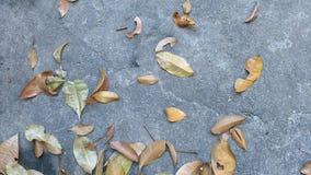 Βγάζει φύλλα σε ένα τσιμεντένιο πάτωμα Στοκ εικόνες με δικαίωμα ελεύθερης χρήσης