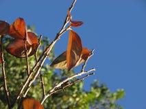 Βγάζει φύλλα στην περίοδο φθινοπώρου Στοκ Εικόνες
