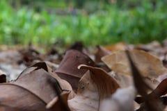 Βγάζει φύλλα στον κήπο Στοκ Φωτογραφία