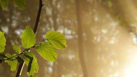 Βγάζει φύλλα στο δάσος απόθεμα βίντεο