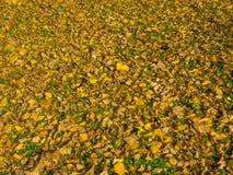 Βγάζει φύλλα στο έδαφος Στοκ εικόνα με δικαίωμα ελεύθερης χρήσης