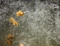 Βγάζει φύλλα στο νερό Στοκ Εικόνες