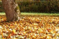 Βγάζει φύλλα του φθινοπώρου Στοκ φωτογραφία με δικαίωμα ελεύθερης χρήσης